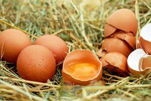 Czy jajko jest zdrowe - mit cholesterolu